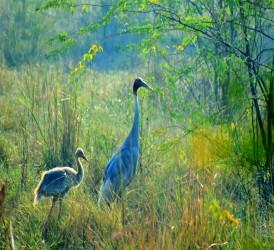 Keoladeo Bird Sanctuary